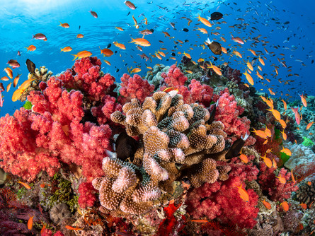 """Coral Reefs: """"Rainforests of the Sea"""""""