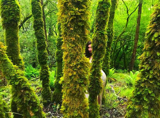 Moss Dripped