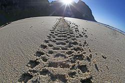 Tracs on remote beaches