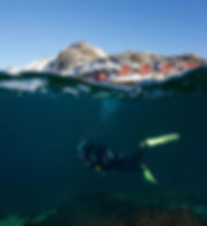 Lofoten Diving.jpg