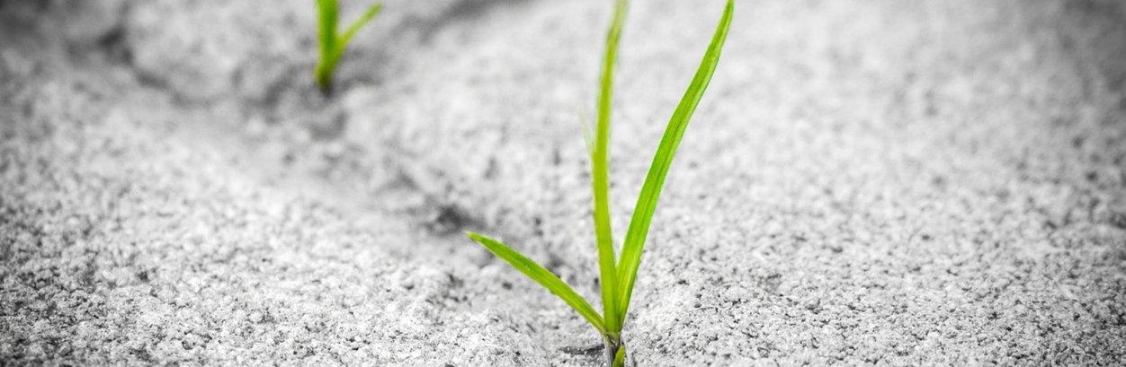 Gras_wächst_aus_Beton.jpg