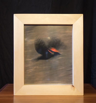 Convertible Light Box - Red Winged Black Bird