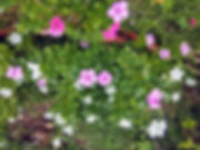 IMG_20170715_124759_HDR.jpg