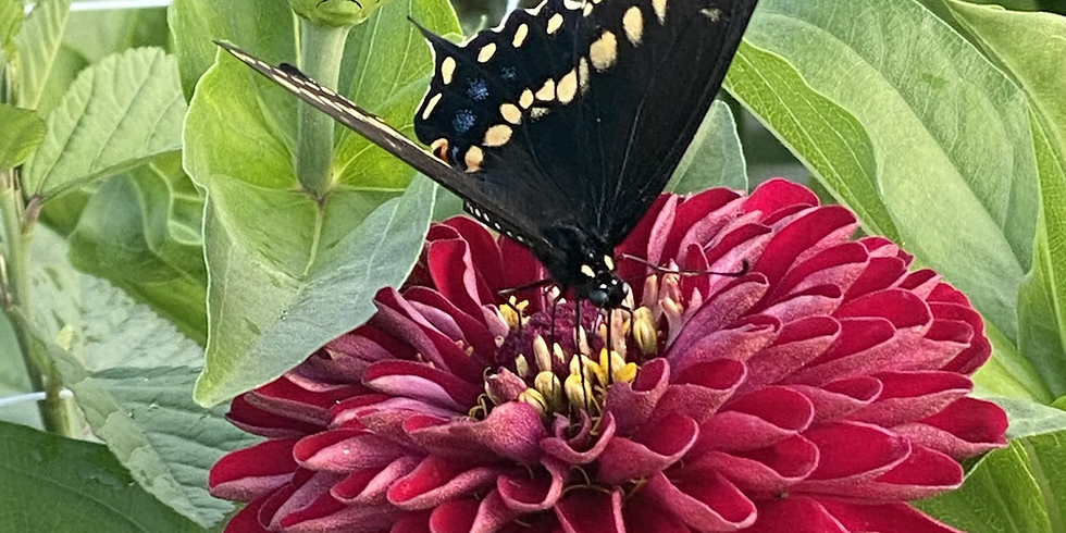 Pollinator Party