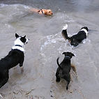 Dog walk at Quy Fen