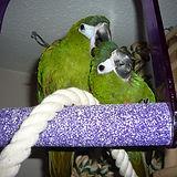 Cambridge bird sitter