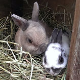 Pet visit for rabbits in Cambridge