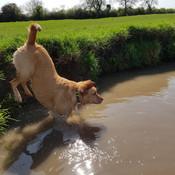 Ella at the river