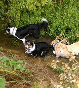 Dog walk in Histon, Cambridgeshire