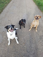 Sam, Mia and Ella walking in Fen Ditton, Camridgeshire