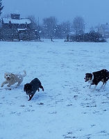 Ozzie, Mia and Sam the dog walkers dream in the snow
