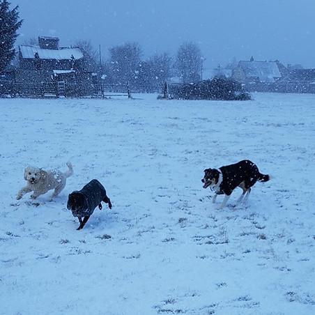 Ozzie, Sam and Mia
