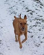 Dog walker in Fen Ditton, Cambridge
