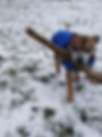 Dog walk in Fen Ditton, Cambridge