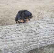 Aliki jumping a huge log