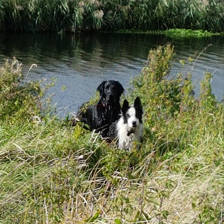 Iolo and Grayling river walk