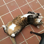Cat sitter in Cambridge area