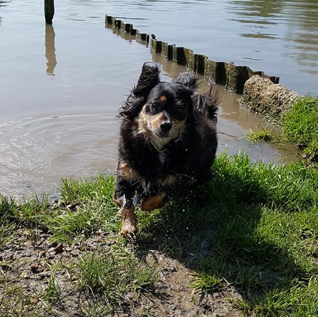 Aliki at the river Cambs
