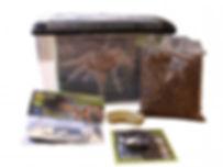 Komodo Basic Spider Kit Spider Set up Home Habtat