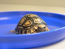 Tortoise Water Care