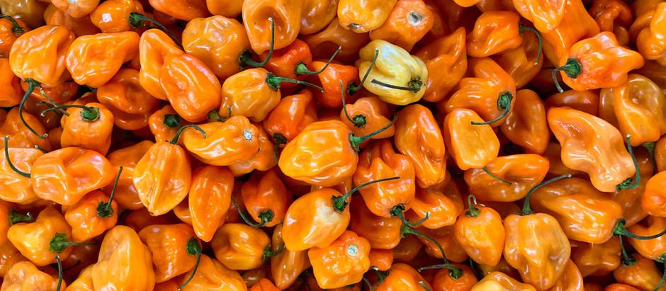 "How to Grow Heatless Habanero ""Habanada"" Pepper Plants From Seeds"