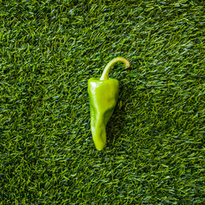 How to Grow Ancho Pepper Plants From Seeds