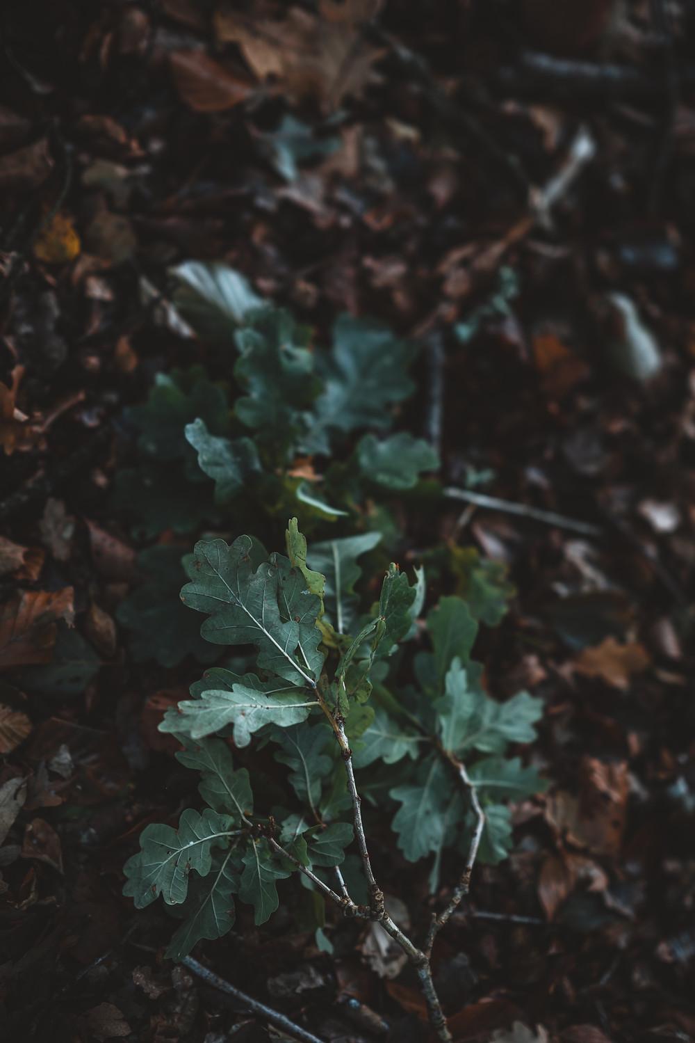 Sacred Plant Co Arugula