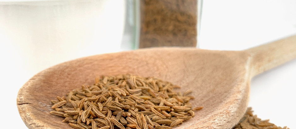 How to Grow Caraway From Seed!