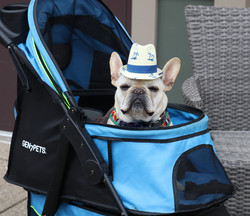 Even Dogs get the Blues