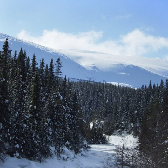 Mäktiga skogar och vackra fjäll i Bydalen
