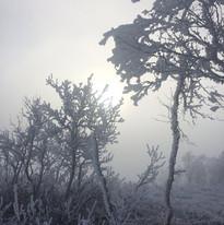 Sagolika fjäll som rustar för vintern. Hemavan.