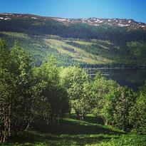 Vackra Renfjället i Åre, klädd i sommarskrud.