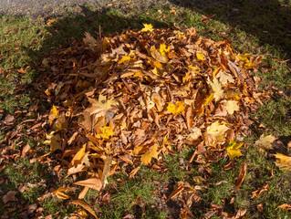 The Leaf Pile