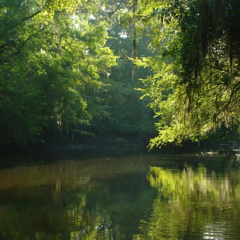 Briar Creek Reflections