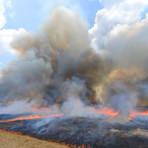 Controlled Burn of the Wheat Field
