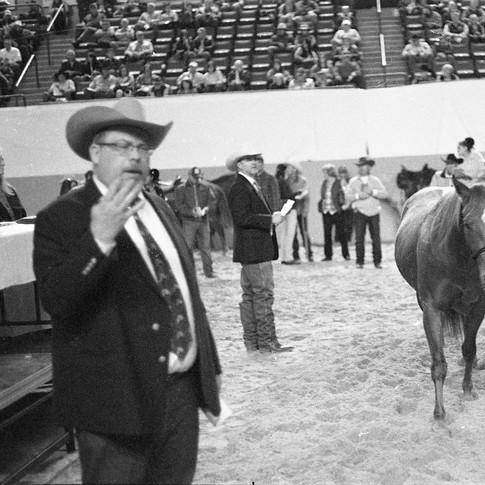 The Horse Auction1