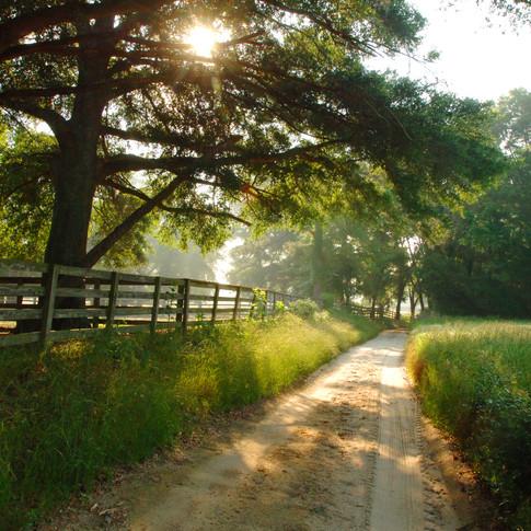 Barnwell County Plantation