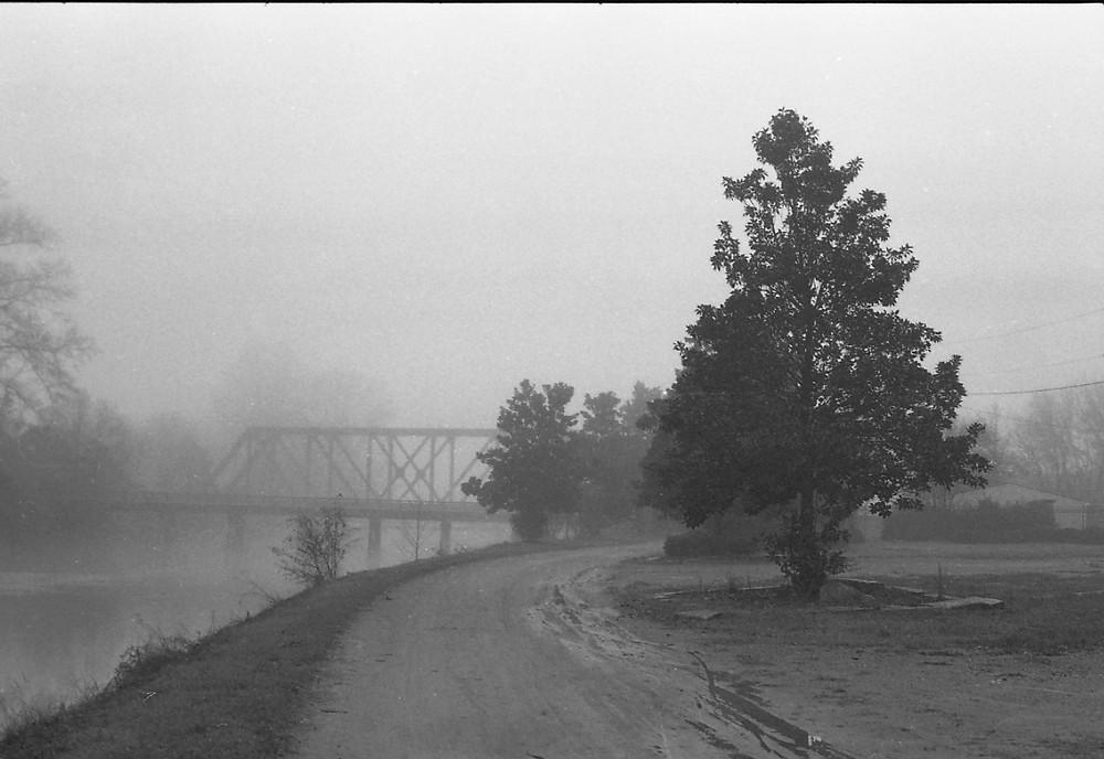 Railroad bridge and magnolia tree along the Augusta Canal