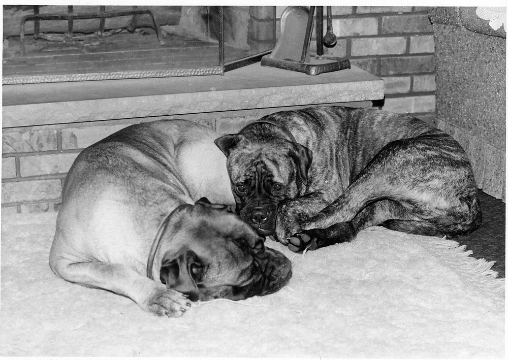 Mack and Mandy sleeping by the fireplace
