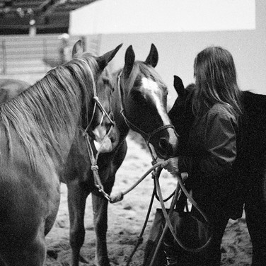 The Horse Auction3