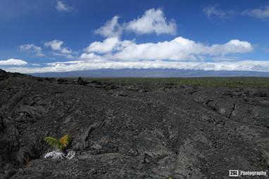 Hawaii - 19/01/2008