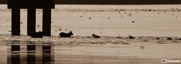 Niger - 11/08/2014