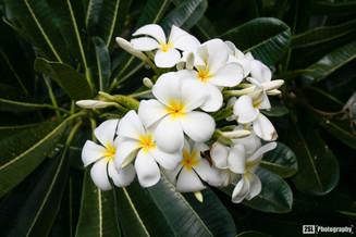 Hawaii - 23/01/2008