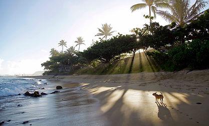 Hawaii 2015 - FARFEL