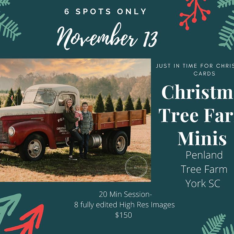 Christmas Tree Mini Penland Tree Farm York SC