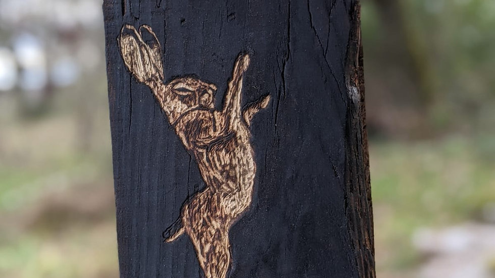 PETER MACGREGOR - Gravure sur bois - Lièvre 22 x 13 cm