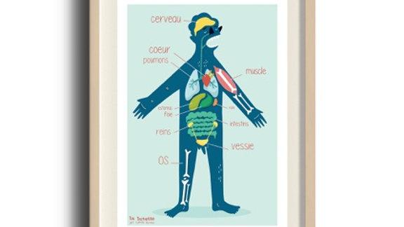 LA LUNETTE-Poster Corps humain - A3 - papier recyclé