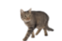 chat animal toulouse adoption