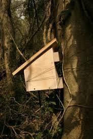 dormouse nest box.jpg