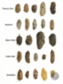 signs_pellets-variety-birds.jpg